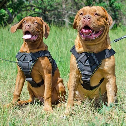 Accessoir Chien - 20 techniques à connaître - Pro - Blog chien