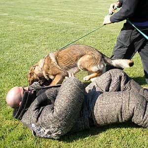 Matériel d'éducation et dressage pour chiens
