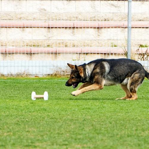 Apportable obéissance pour chien «Éducation universelle
