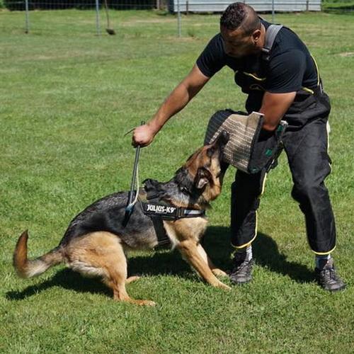 Combinaison protection légère de dressage chien - PBS9