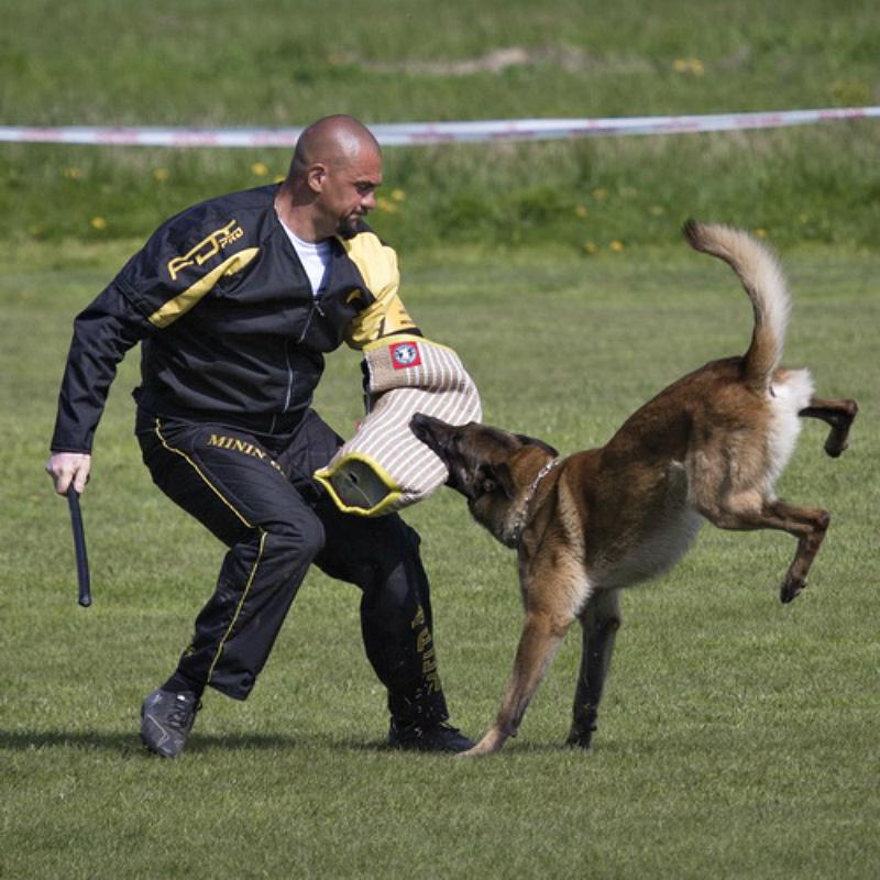 Costume de dressage chien «Entraînement de force» - PBS4